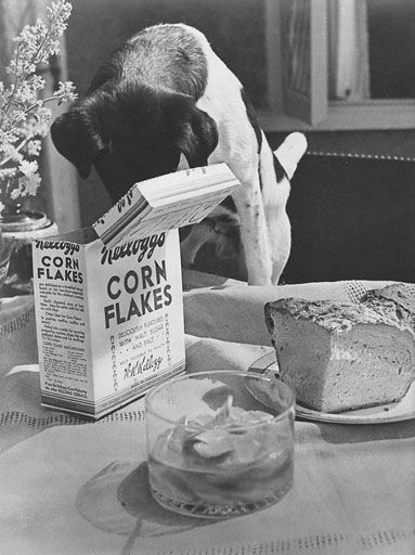 photo of a dog eating from a box of corn flakes